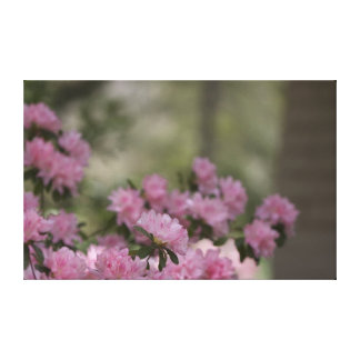 Pink Gardenia Canvas Canvas Print