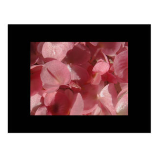 Pink geranium: almost solid Light pink Postcard