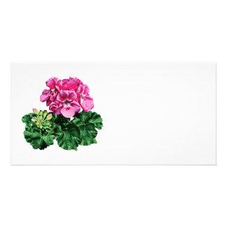 Pink Geranium with Dew Photo Greeting Card