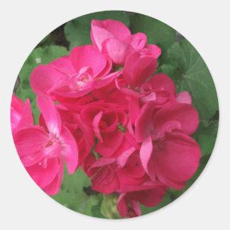 Pink Geraniums Classic Round Sticker