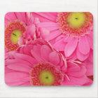 Pink Gerber Daisies Mouse Pad