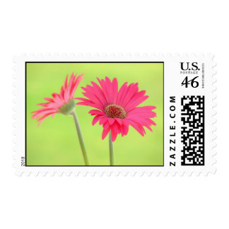 Pink Gerber Daisies on Green Stamps Postage