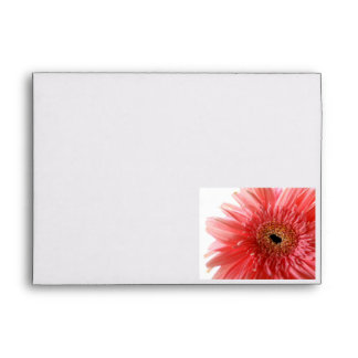Pink Gerber Daisy Envelope