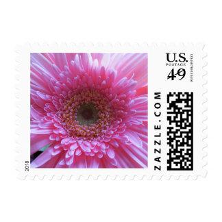 Pink Gerber Daisy Flower Postage