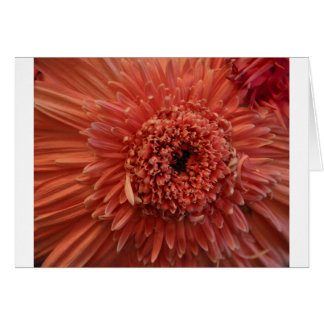 Pink Gerber Daisy Greeting Cards