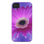 Pink Gerber Daisy iPhone 4 Case-Mate Cases