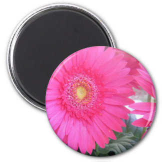 Pink Gerber Daisy Magnet