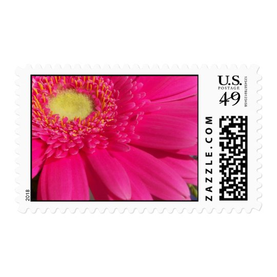 Pink Gerber Daisy Postage