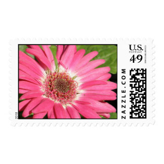 Pink Gerber Daisy Postage Stamp