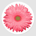 Pink Gerber Daisy Round Sticker