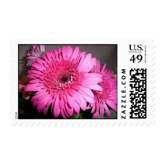 Pink Gerber Daisy stamp