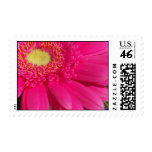 Pink Gerber Daisy Stamps