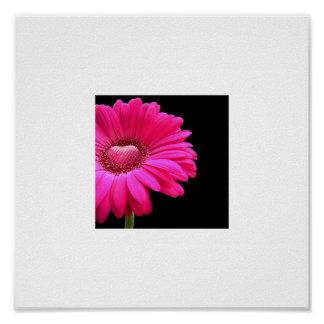 pink gerber daisy with heart poster