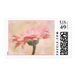 """""""Pink Gerber"""" Postage Stamps"""
