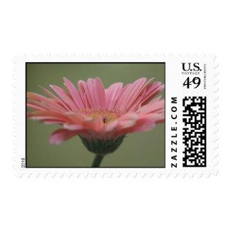 Pink Gerber Stamps