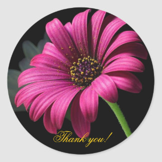 Pink Gerber Thank you! Classic Round Sticker