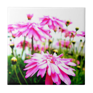 Pink Gerbera Daisies Field Small Square Tile