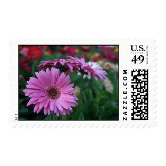 Pink gerbera daisies floral postage stamps