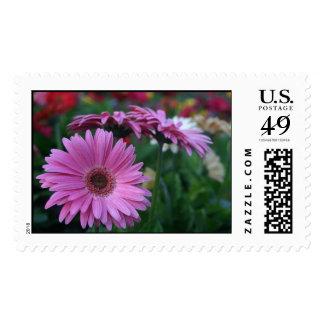 Pink gerbera daisies floral wedding postage stamps