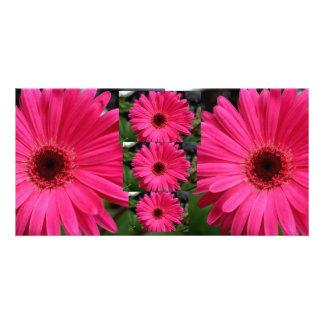 Pink Gerbera Daisies Photo Card