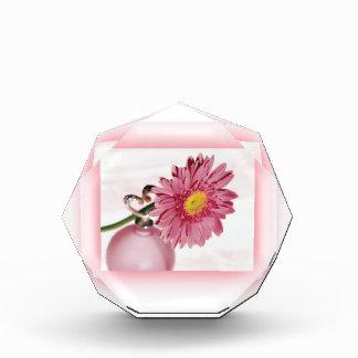 Pink Gerbera Daisy Award