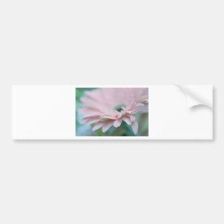 Pink Gerbera Daisy Bumper Sticker