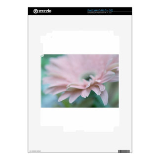 Pink Gerbera Daisy Decal For The iPad 2