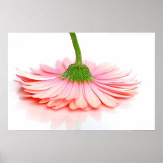 Pink Gerbera Daisy Flower Photograph Poster