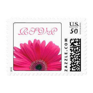 Pink Gerbera Daisy Flower White Wedding RSVP Postage
