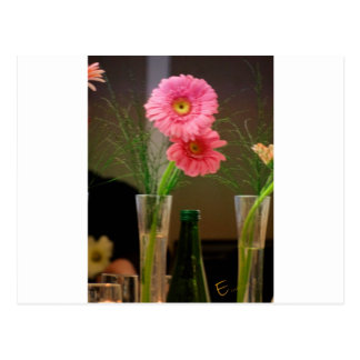 Pink Gerbera Daisy Gifts Postcards