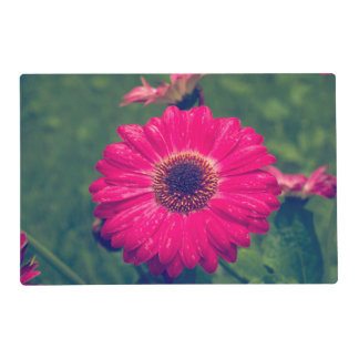 Pink Gerbera Daisy in Bloom Placemat