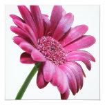 """Pink Gerbera Daisy Invitation 5.25"""" Square Invitation Card"""