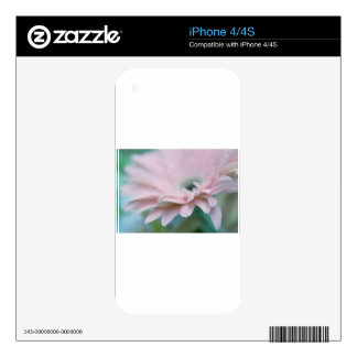 Pink Gerbera Daisy iPhone 4S Skins