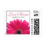 Pink Gerbera Daisy Love Blooms Wedding Postage