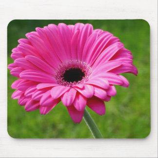 Pink Gerbera Daisy Mouse Pad