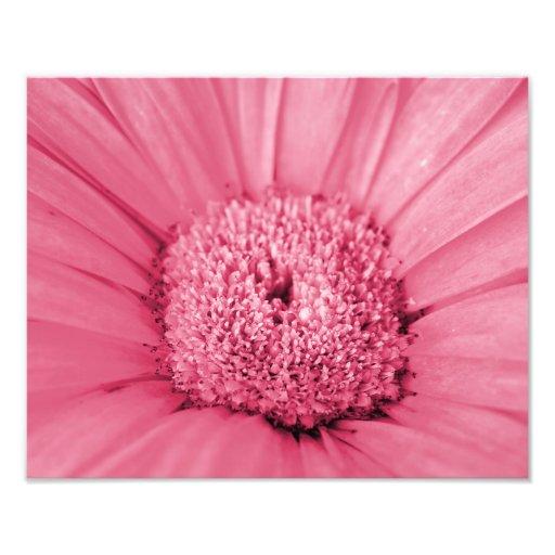 Pink Gerbera Daisy Photo Print