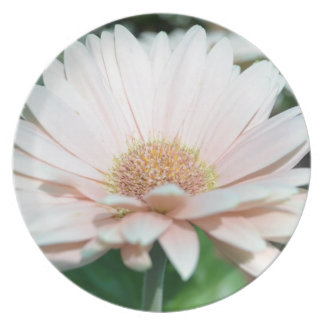Pink Gerbera Daisy Plate