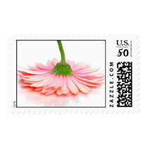 Pink Gerbera Daisy Postage