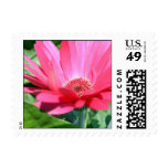 Pink Gerbera Daisy Postage Stamps