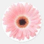 Pink Gerbera Daisy Round Stickers