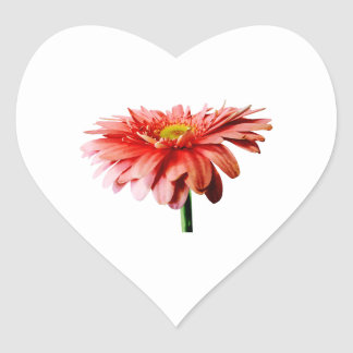 Pink Gerbera Daisy Side View Stickers
