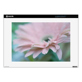 Pink Gerbera Daisy Skin For Laptop