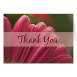 Pink Gerbera Daisy Thank You Cards