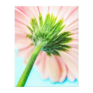 Pink Gerbera Flower Macro Stem Back Canvas