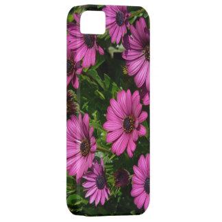 Pink Gerbera iPhone 5 Case
