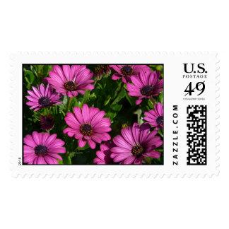 Pink Gerbera Postage Stamp