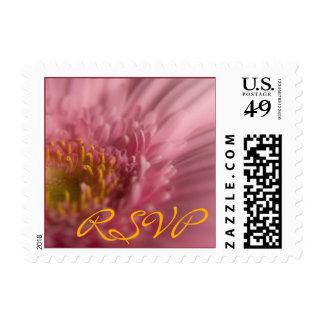 Pink Gerbera • RSVP Stamp