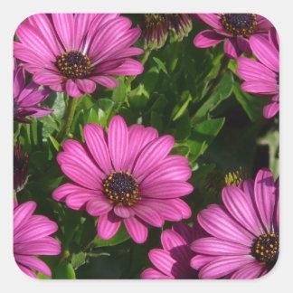 Pink Gerbera Square Sticker