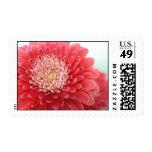 Pink Gerbera Stamp