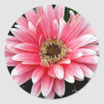 Pink Gerbera Sticker
